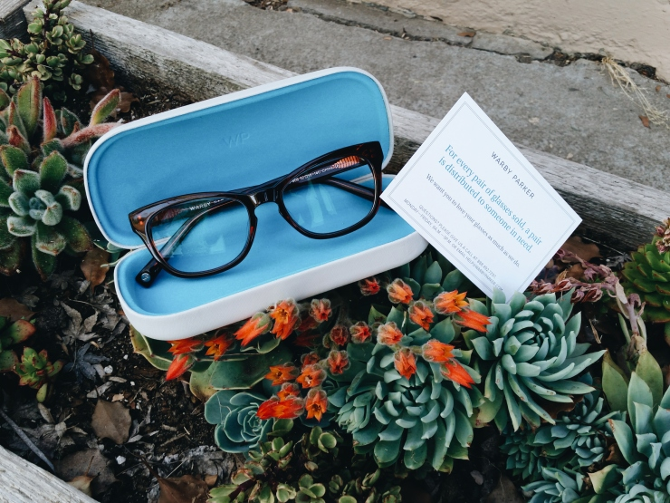 warby parker in a succulent